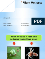 Filum Mollusca
