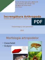 Increngatura Arthropoda