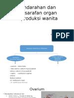vaskularisasi sistem reproduksi wanita dan persarafan