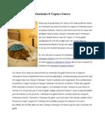 Urgence Veterinaire Geneve