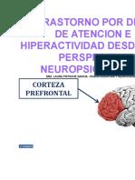 El Trastorno Por Deficit de Atencion e Hiperactividad Desde Una Perspectiva Neuropsicologica