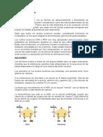 ÁCIDOS-NUCLÉICOS (1)