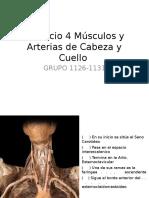 Ejercicio 4 Músculos y Arterias