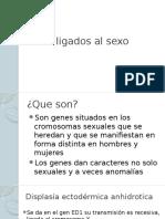 Genes Ligados Al Sexo