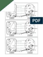 Sains F1-Cells Comparison Handout