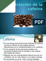 Extracción de la cafeina.pptx