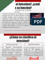 Corazon Intestino ICS