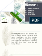 Bio Photosynthesis