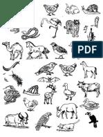 Gambar DST T3 Ciri Haiwan