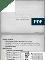 Apuntes de neuropsicología.pdf