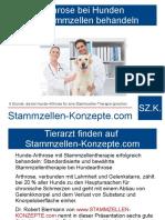 6 Gründe, die bei Hunde-Arthrose für eine Stammzellen-Therapie sprechen