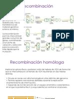 GeneticaMicrobiana B