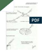 Practica #1 peso volumetrico de los agregados laboratorio de suelos