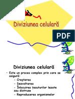 diviziunea
