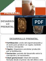 Psicología Del Embarazo