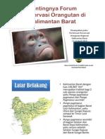 Pentingnya Forum Konservasi Orangutan Di Kalimantan Barat