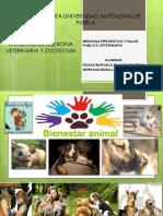 Bienestar Animal (veterinaria)