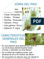 Tipos de reproduccion asexual vegetativa distonija