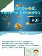 EVOLUCIÓN DEL SISTEMA NERVIOSO.pptx