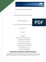 Anatomía de Genitales Femeninos - LABO IV