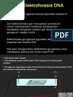 2a. DNA Gel Electorphoresis 2007