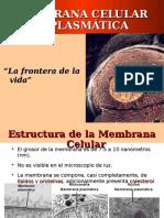 membrana plasmatica