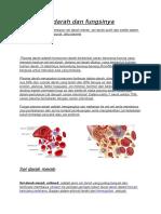 Komponen Darah Dan Fungsinya
