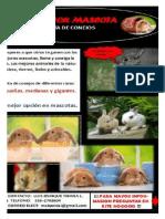 Conejos Carne