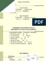 2. REINO PROTISTA MICROBIOLOGIA.pptx