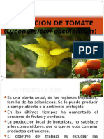 Tomate, Locote, Berenjena y Papa