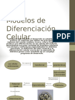 Modelos de Diferenciacion Celular