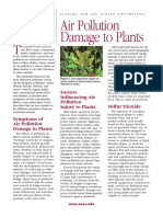 Air Pollution Damage to Plants