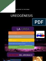IV.I Ureogénesis.pptx