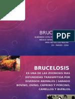 Brucelosis Tema Expo Imss 2016 Marzo