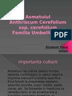 Asmatuiul -Proiect la legumicultura