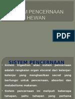 Sistem Pencernaan Hewan