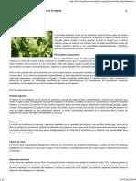 La Alcachofa_ Medicina Natural Para El Hígado