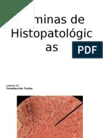 Laminas de Hispotalogicas
