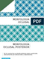 Morfología oclusal
