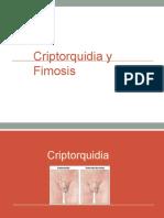 criptorquidia y fimosis