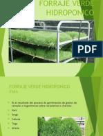 fvh Pasto Hidroponico