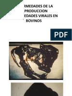virales bovino.pdf