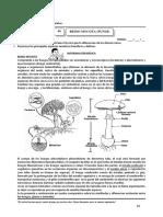 Tema 4 - 5_Biologia 5º