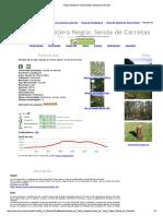 Ruta_ Hayedo de Tejera Negra_ Senda de Carretas