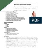 Fundamentos de La Anatomia Humana