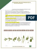 c92736b0d8dd Manual Tecnico de Cultivo de Paltas