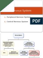 Central Nervous System New