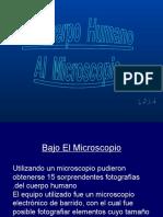 07 Bajo El Microscopio