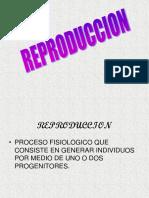reproduccion-Benny-Benny.pdf