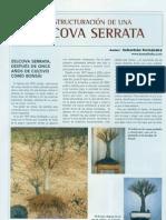 Zelkova Serrata Bonsai Actual Sebastian Fernandes